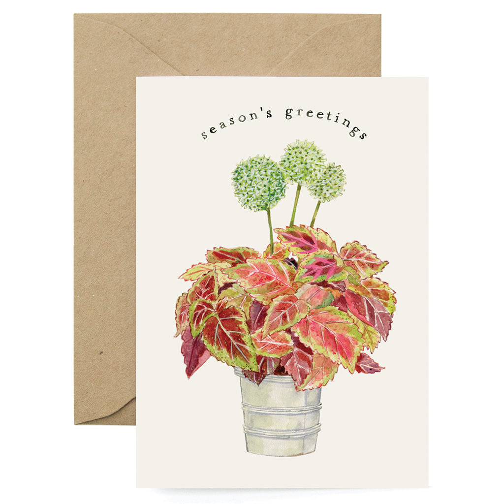 Holiday Coleus Card