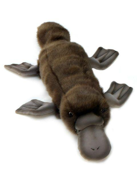 "Platypus 16"" - UNQFurniture"