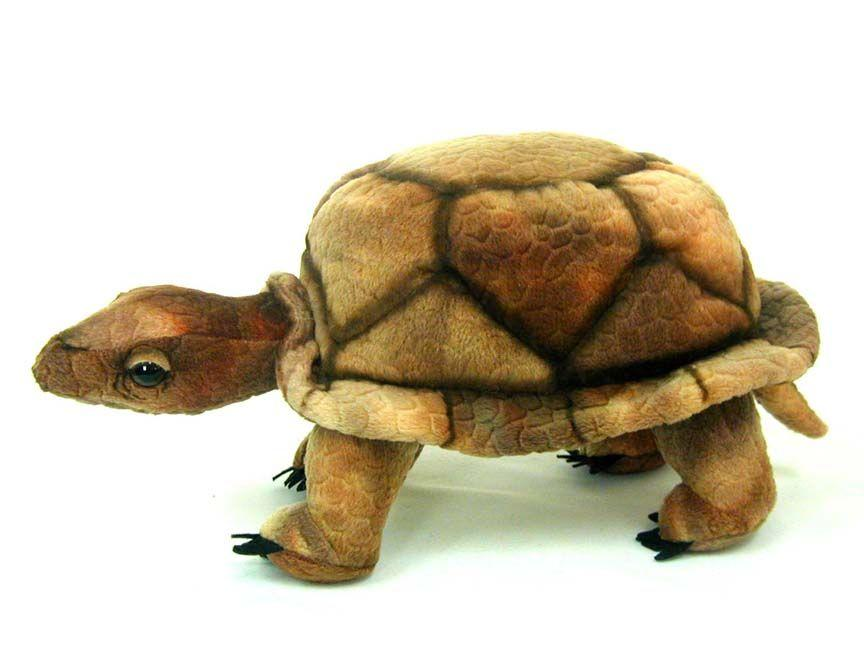 "Wood Turtle 9"" - UNQFurniture"