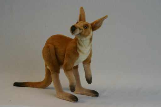 Male Kangaroo 26''L - UNQFurniture