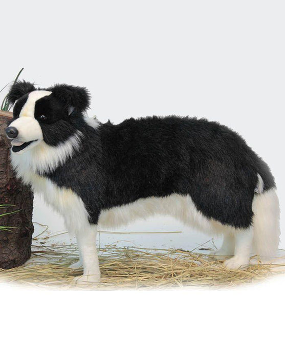 Border Collie Stnd 33''L - UNQFurniture