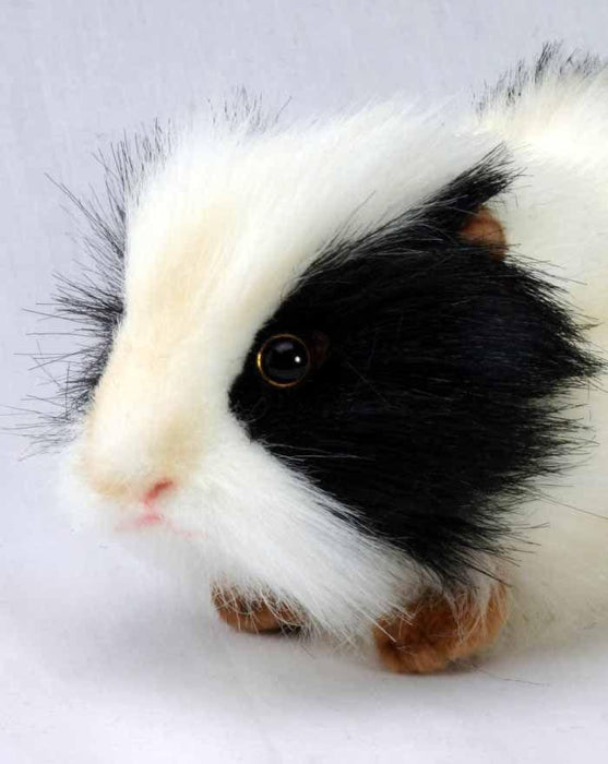 "Black/White Guinea Pig 8"" - UNQFurniture"
