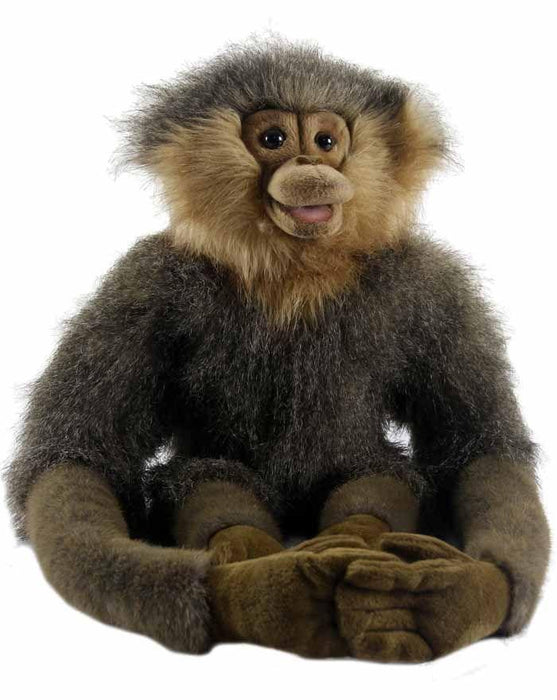 Gibbon Long Arms 24'' - UNQFurniture