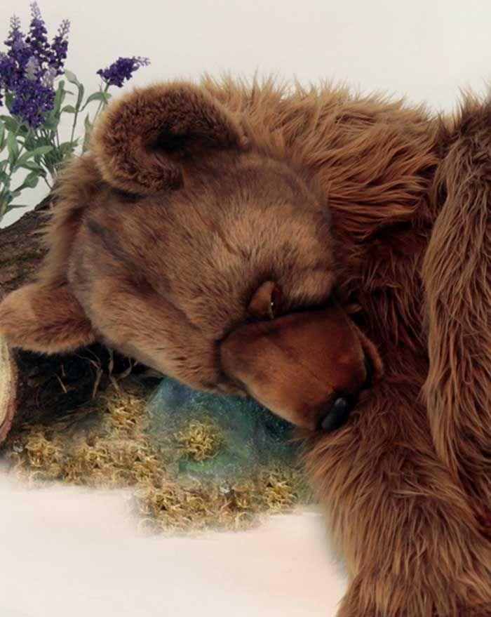 "Grizzly Bear Sleeping 55""L - UNQFurniture"