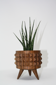 small tzalam wood planter with stud texture and succulent inside