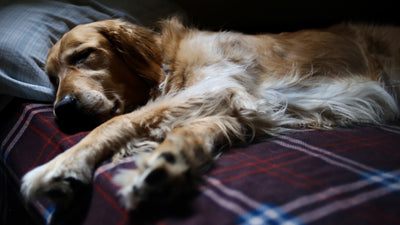 5 Wide Awake Facts About Dogs & Sleep