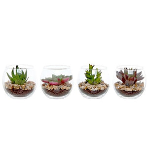 Succulent Plant Set of 4  Clear Decorative  Modern Design Round Artificial Display Vases