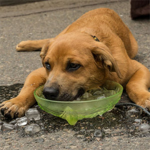 Pets Hot Weather Quick Tips for Keeping Safe