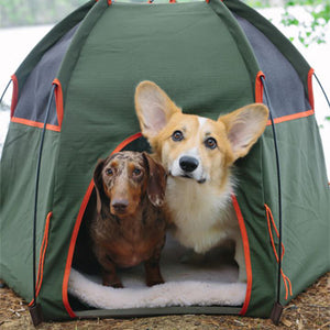 Social Distance Camping With Your Pets