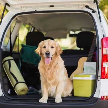 Pet Friendly Vacation Planning & Activities