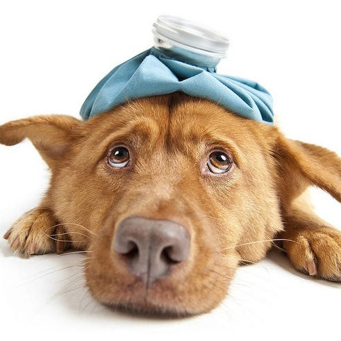 Foods Your Pets Should Never Eat To Stay Out Of The ER