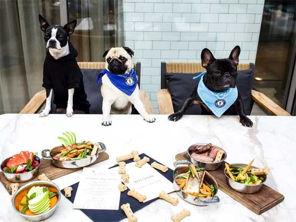 Dog Friendly Restaurants Near Me