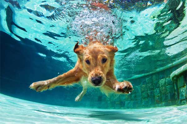 Dogs Swimming In The Pool