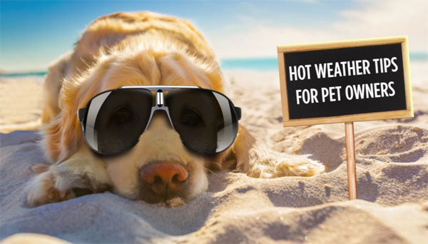 Hot Weather Tips For Pet Owners.