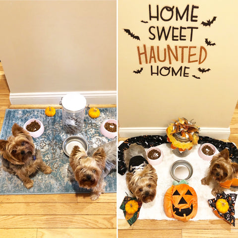 Before and After Halloween Dog Bowl Area Smalldog Official