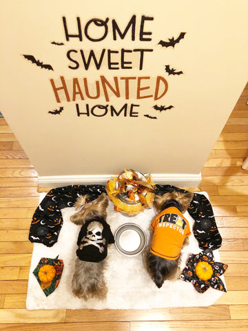 Halloween Decor for dogs Smalldog Official