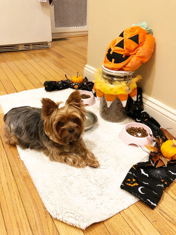 Sophia enjoying her Halloween Dog Decor Smalldog Official