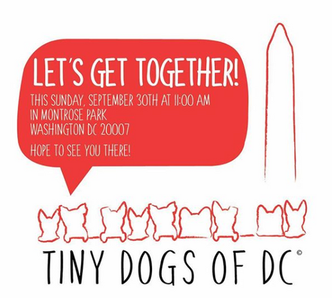 Tiny Dogs of DC Get Together