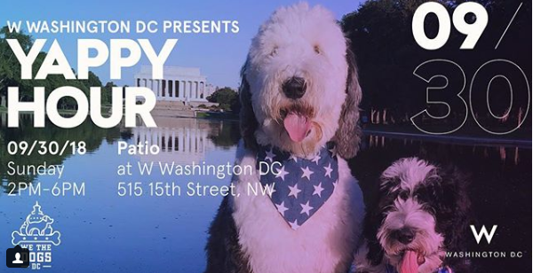 We The Dogs DC Meet Up Dog Events in DC