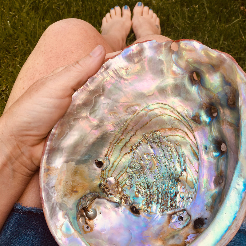 Abalone reminds us of the beauties of the ocean on a sunny day