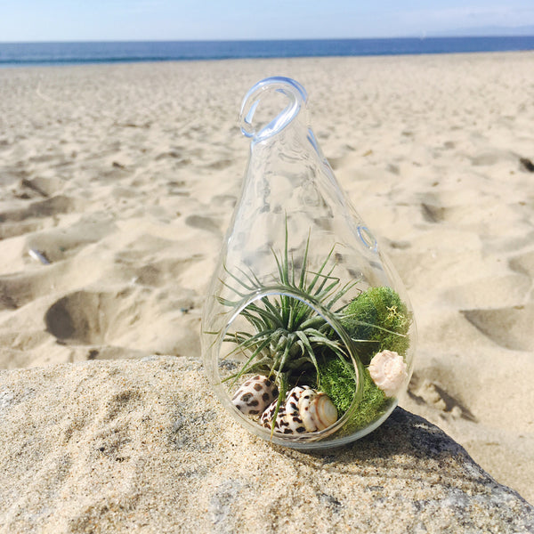 Succulent Jewelry Box: Teardrop Shaped Glass Terrarium with Tillandsia & Amazonite Bracelet to Create a Feeling of Power Within You with an Antiqued Brass Key to Unlock Your Possibilities.