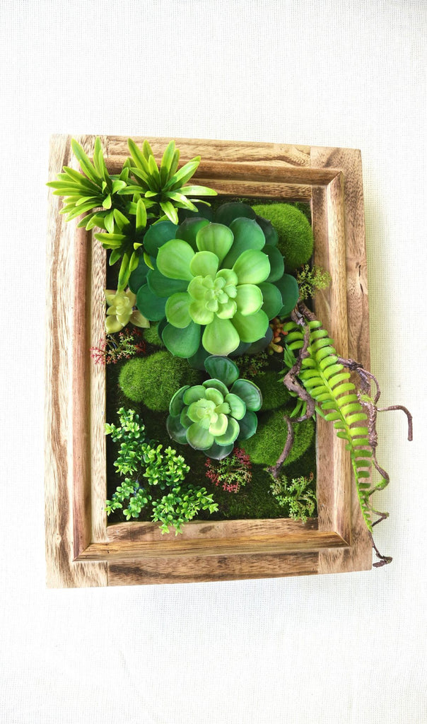 SUCCULENTS FRAME - MiniGardens NZ