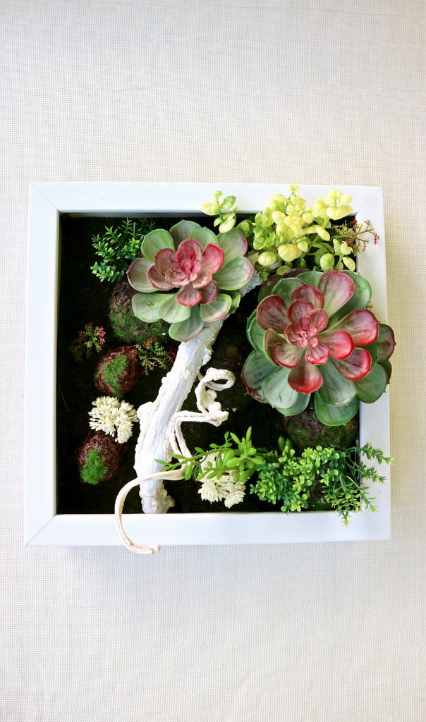 SUCCULENTS FRAME #4 - MiniGardens NZ