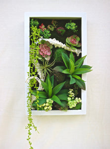 SUCCULENTS FRAME #3 - MiniGardens NZ
