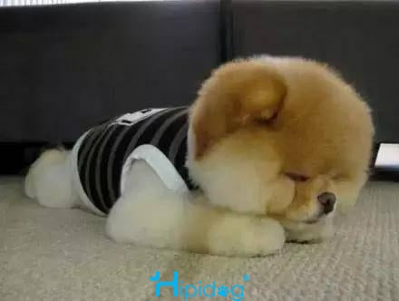 Sleeping puppy is so cute that  all troubles throw away! Sleeping dog 5