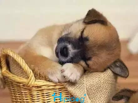 Sleeping puppy is so cute that  all troubles throw away!1