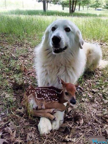 A baby deer on dog's leg, feeling a little nervous and a little excited..-Hipidogpet