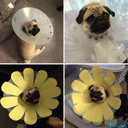 Made a flower to dog cycle, immediately smile!-Hipidogpet