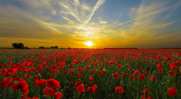 Closed for Anzac Day - Thursday 25th April