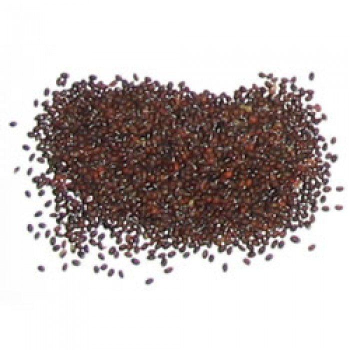 Catnip Seeds (Nepeta cataria)