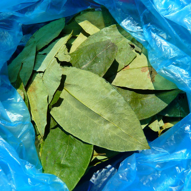 Coca Leaf Tea (Decocainized)