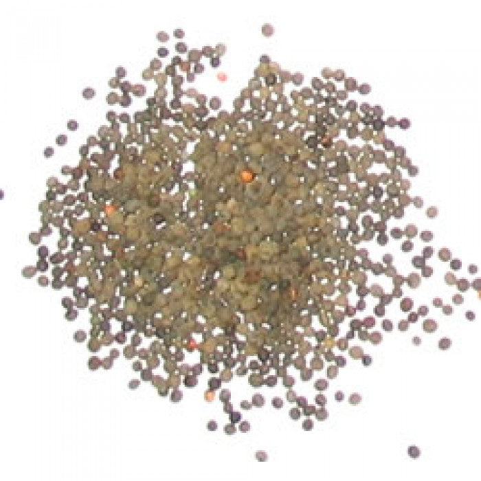 Poppy Seeds - California Poppy (Eschscholzia californica)