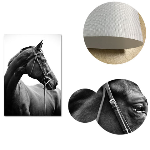 Horses Black and White Canvas Wall Art