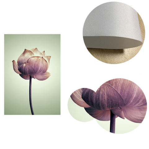 Lotus Flowers Canvas Posters
