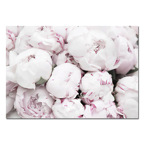 Pink Peony Canvas Posters