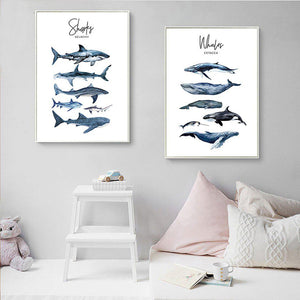 Whales and Sharks Kids