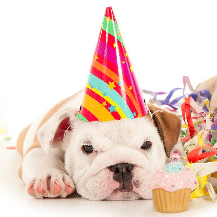 Birthday Party Activities for your Pet in Montreal