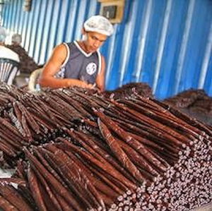 Why the price of vanilla soars