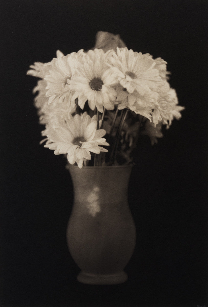 Daisies in vase david aimone photographic daisies in vase reviewsmspy