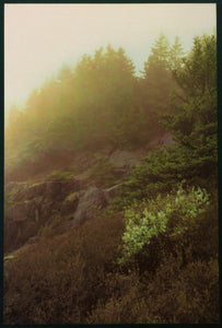 Monhegan Hillside in Sunlit Fog