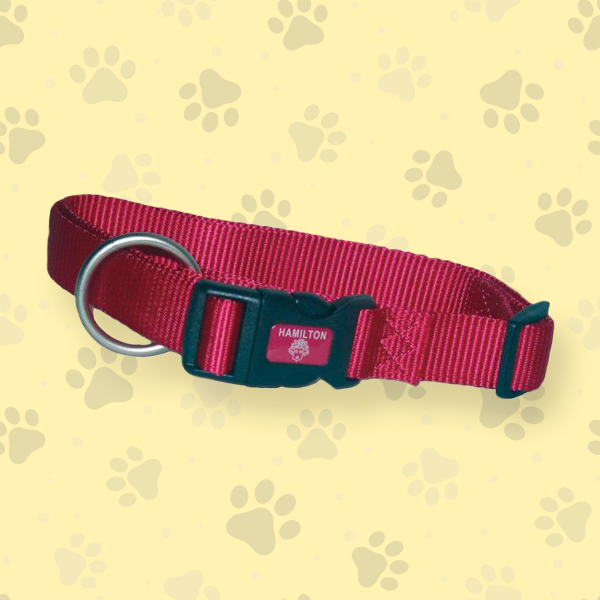 collections/Dog_Collar_Category_Graphic.png