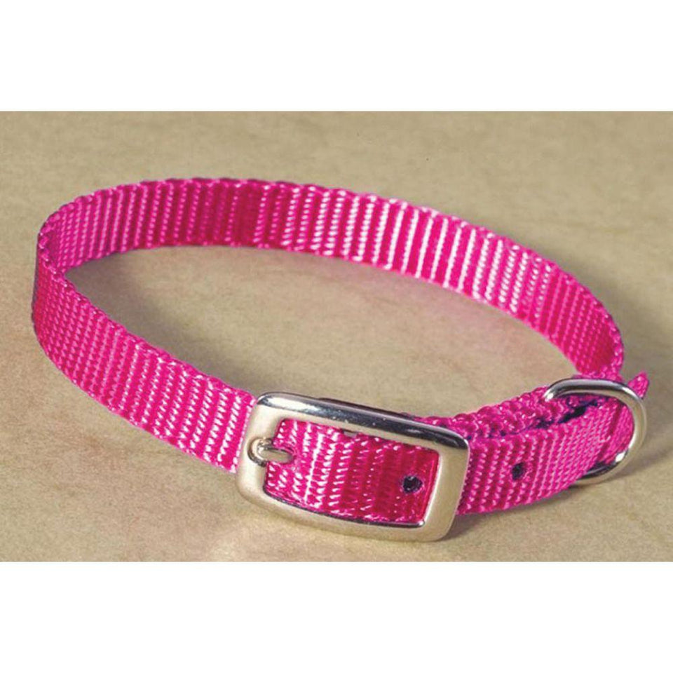 Single Thick Nylon Dog Collar (Size 3/8 X 12 In. Color Hot Pink)
