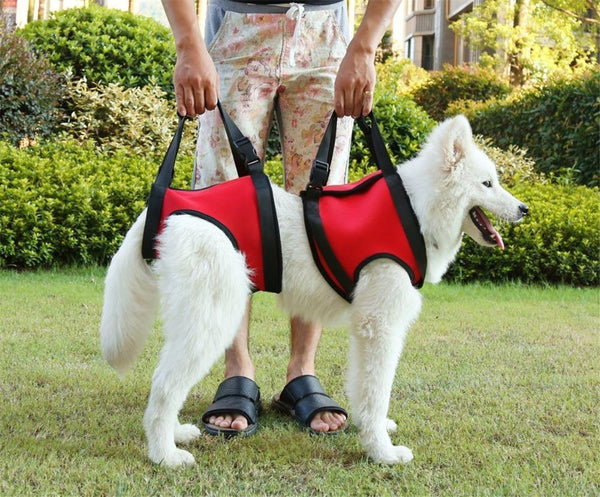 Pet Assist Dog Harness Red Front Legs S