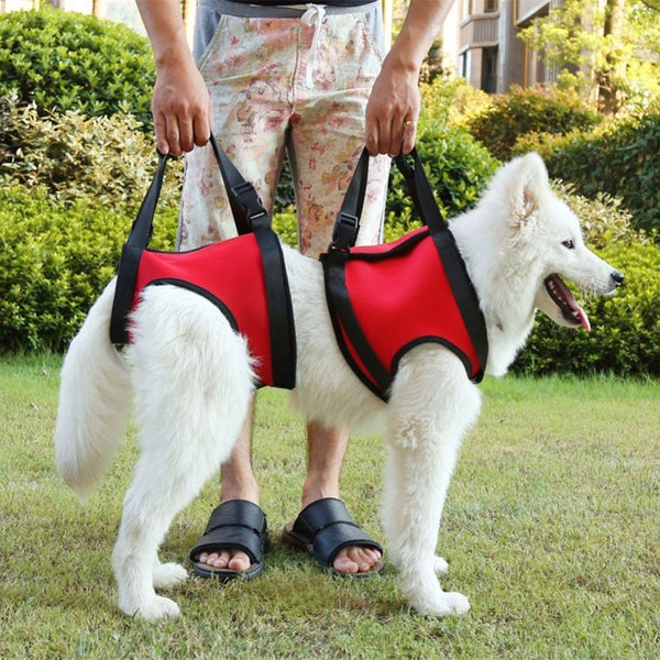 2Pcs/Set Dog Harness Vest Support