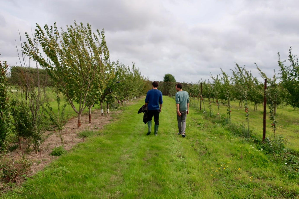 kentish-pip-cider-orchards
