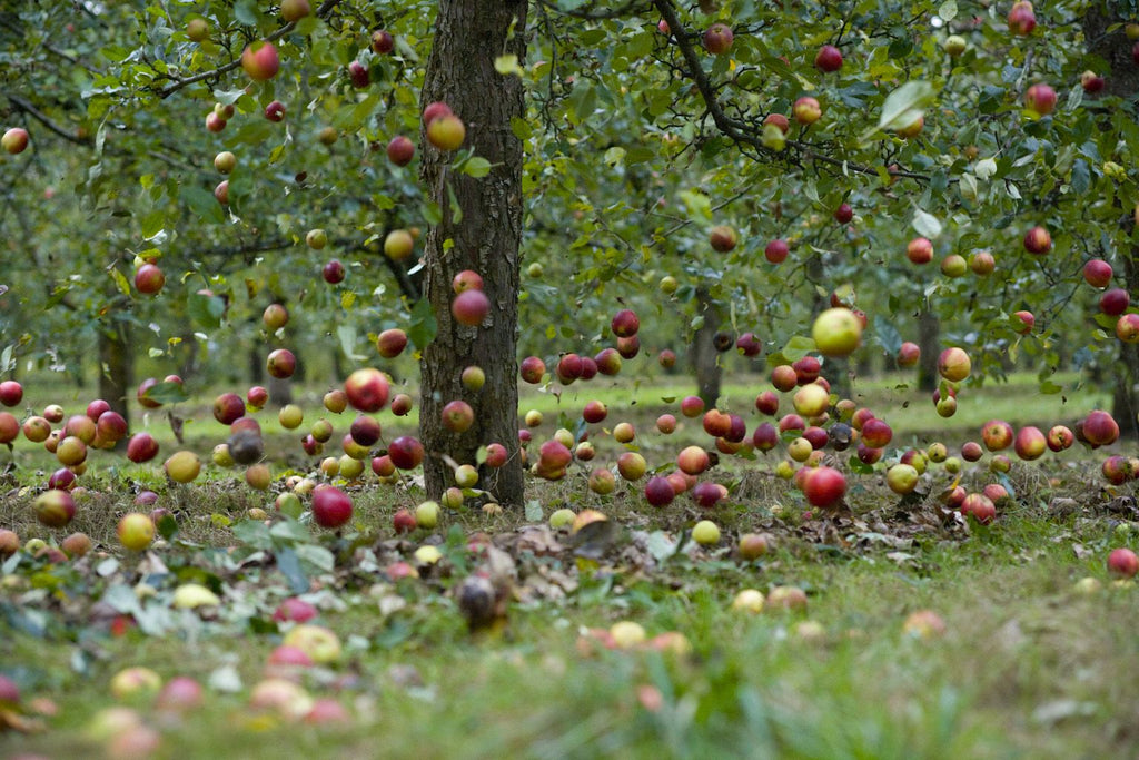 cider-sustainability